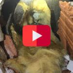 Investigations approfondies Cloisons briquettes